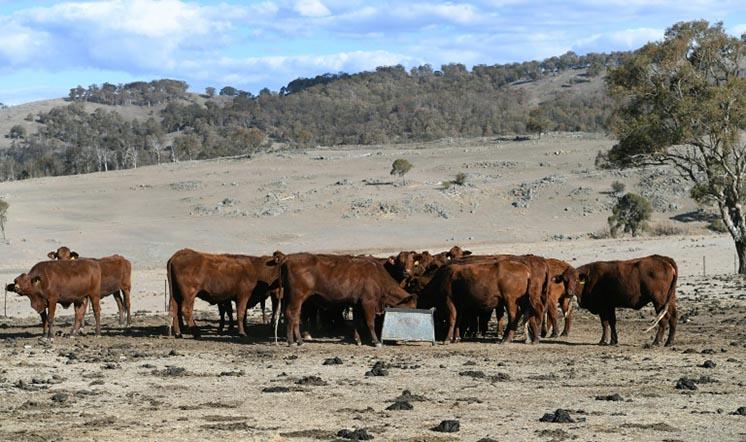 В Австралії закінчується питна вода